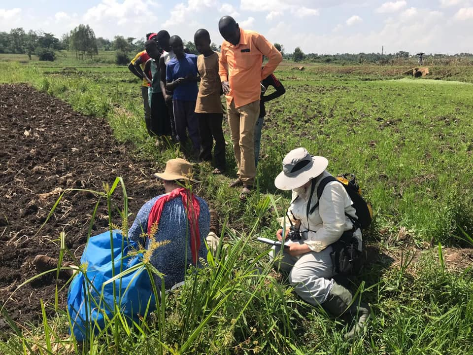 Peatlands study findings to help Nile Basin countries improve on climate change mitigation